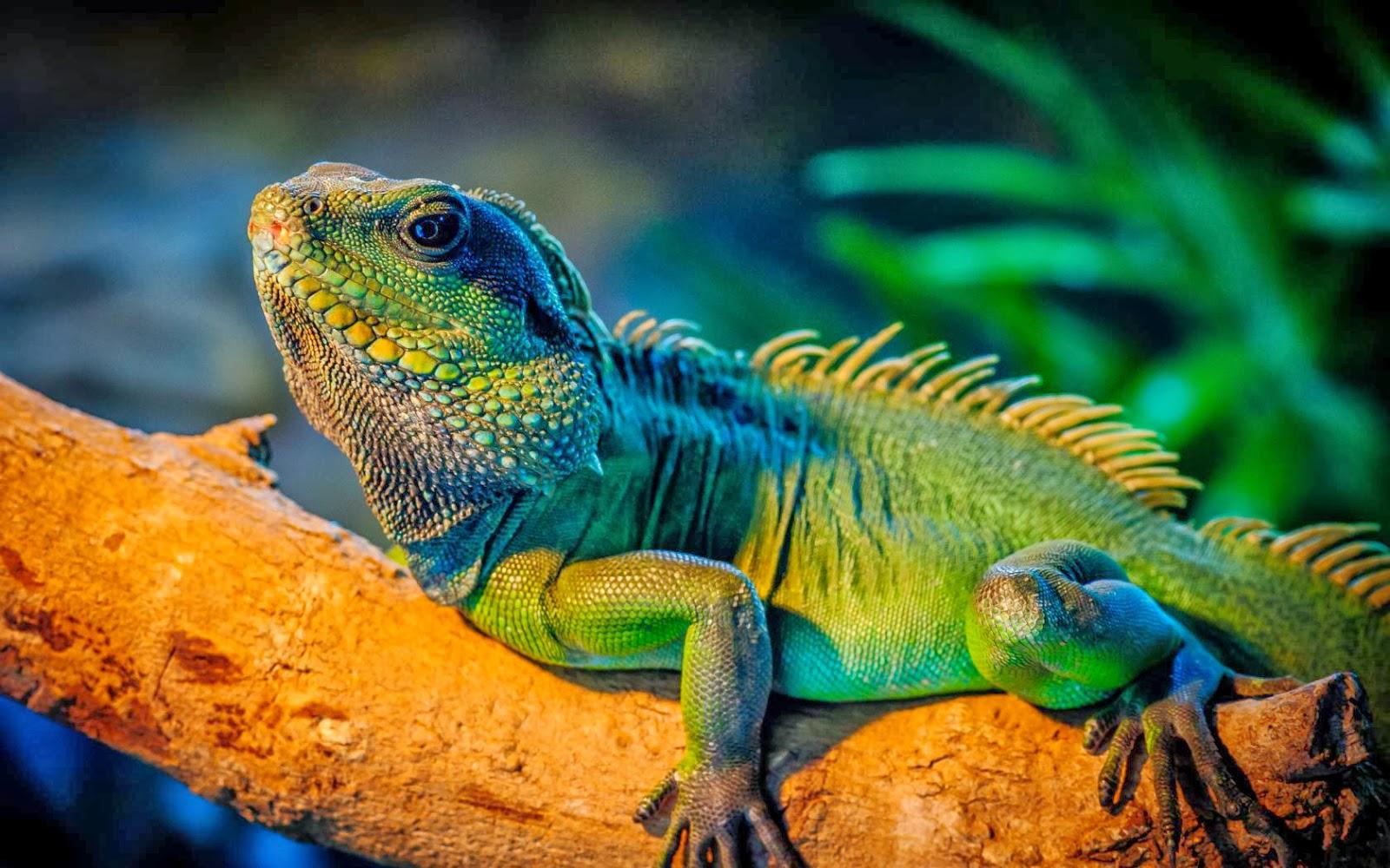 Iguana verde: cuidados y nombres para tu mascota. Iguana verde