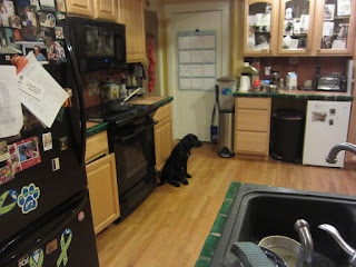 Coach is sitting at the far end of the kitchen by the pantry (magic) door.  He looks wistful and a bit hungry.