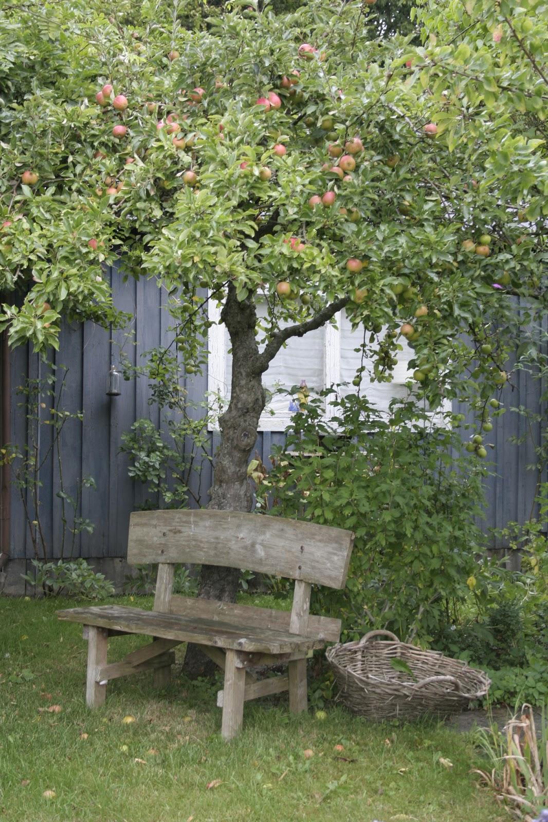 Öarnas trädgårdsplanering: våga satsa på stora träd!
