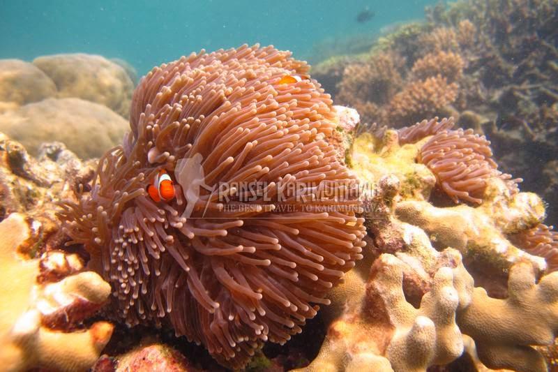 jaga terumbu karang saat snorkeling