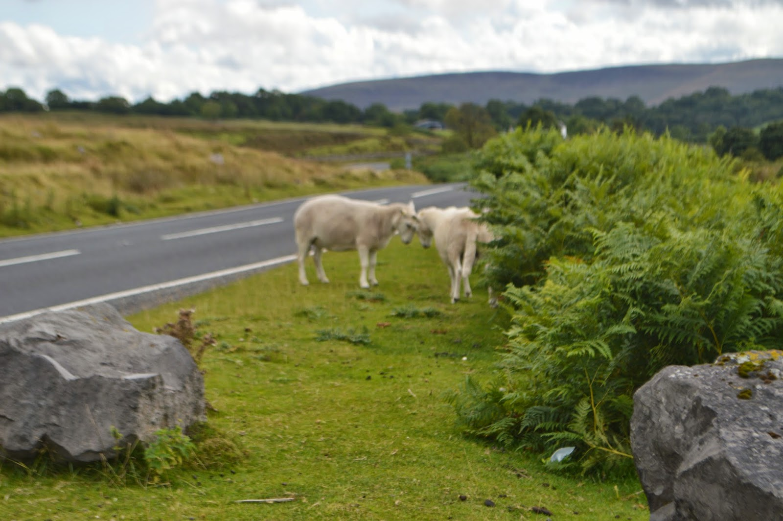 Road Trip Pembrokeshire Brecon Beacons Newport Mountains Sheep Woods PGL