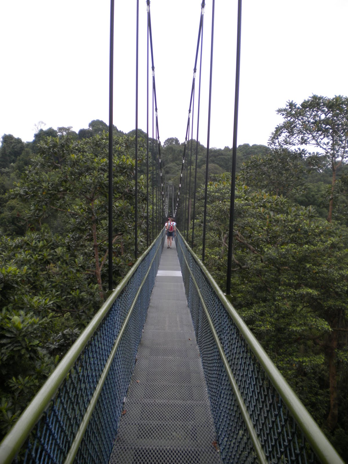 how to get to tree top walk singapore