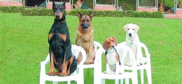 pet shop Compreendendo o Comportamento dos Cães