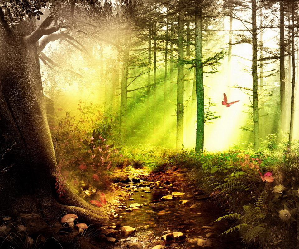 Утренний лес для планшетов - Скачать HD ...: skachat-oboi-na-planshet.blogspot.com/2013/05/blog-post_3016.html