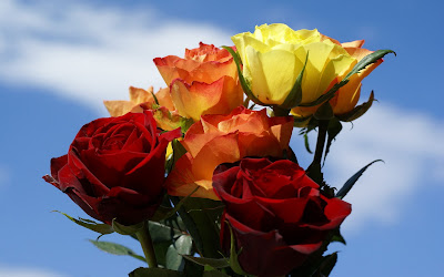 Orange Yellow Red Roses Wallpapers