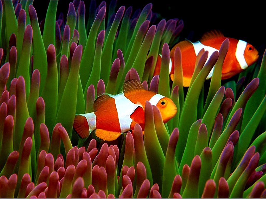 animals aquatic wallpapers wallpapers 2 36