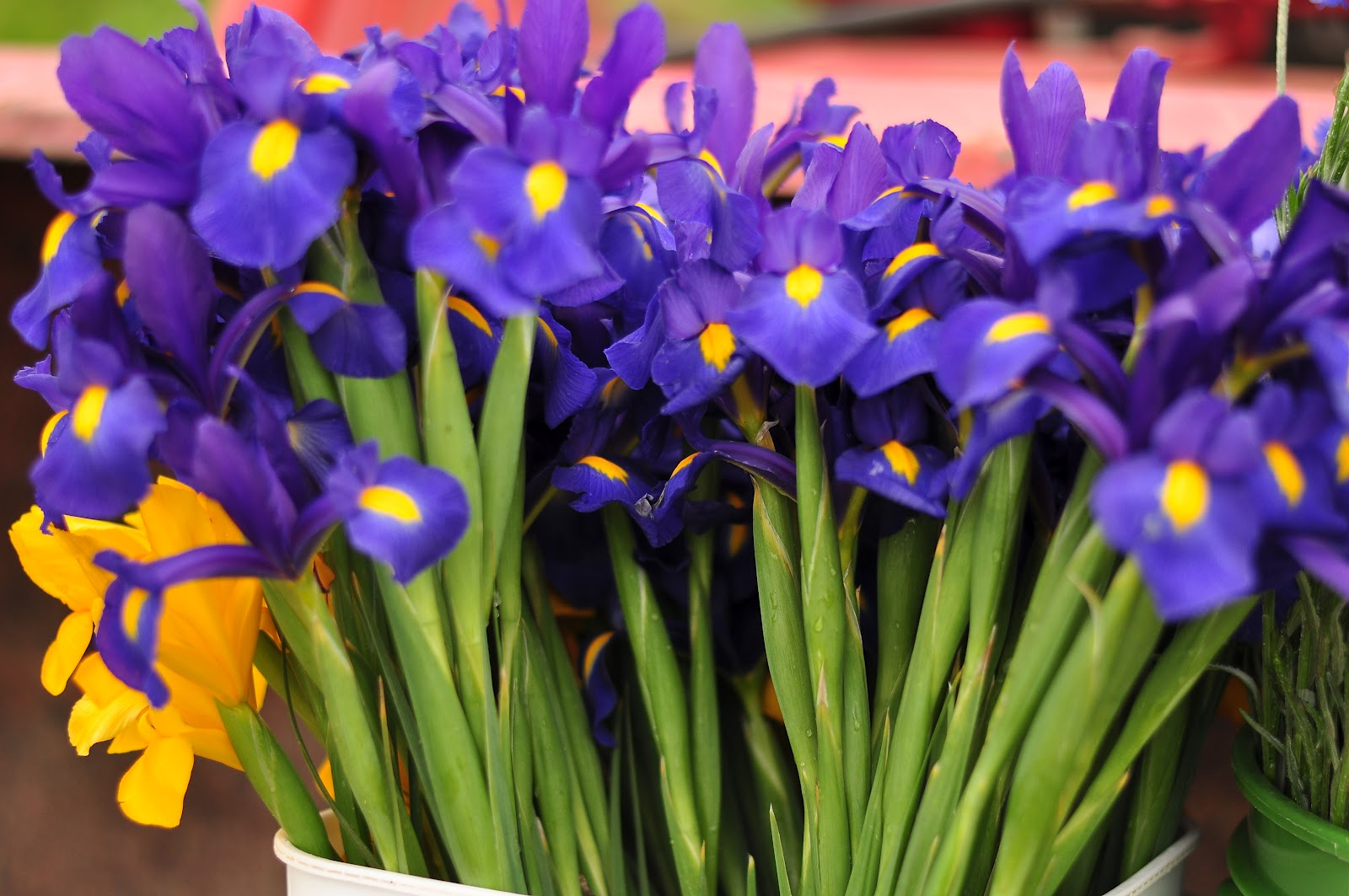 Blue dragonfly cut flower farm 030915 spring flowers 030915 spring flowers dhlflorist Choice Image