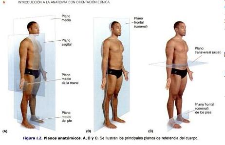 Anatomía A Un Clic : Generalidades e Introducción a la Anatomía