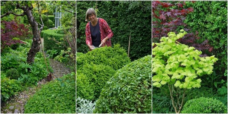 Katarinas trädgård