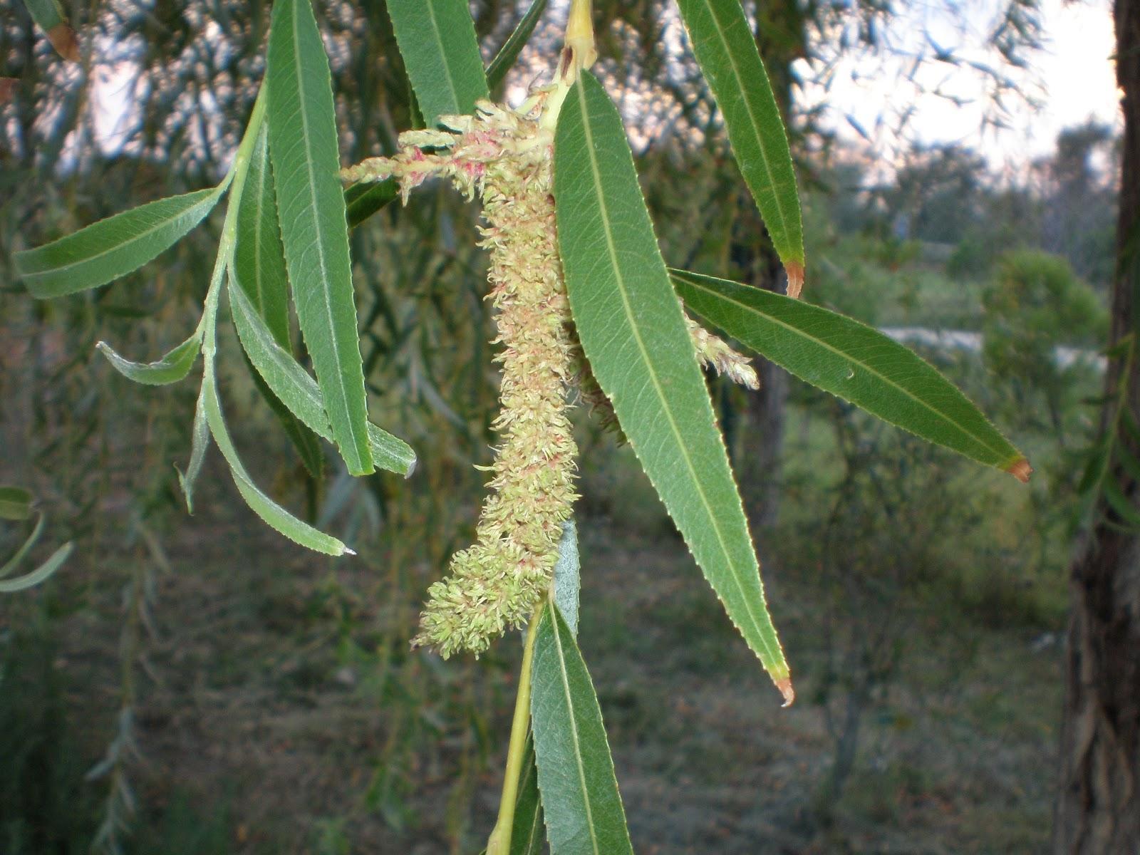 Flores de bach y Los Chakras - Esencial Natura