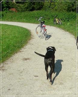 Hund auf dem Fuß/Radweg