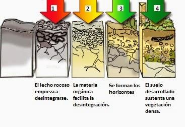Wild bioblog la formaci n del suelo for Proceso de formacion del suelo