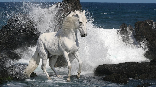 White Horse In The Ocean Waves HD Wallpaper