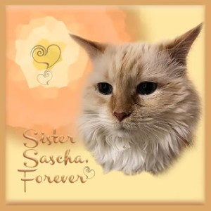 Sweet Sascha, we miss you