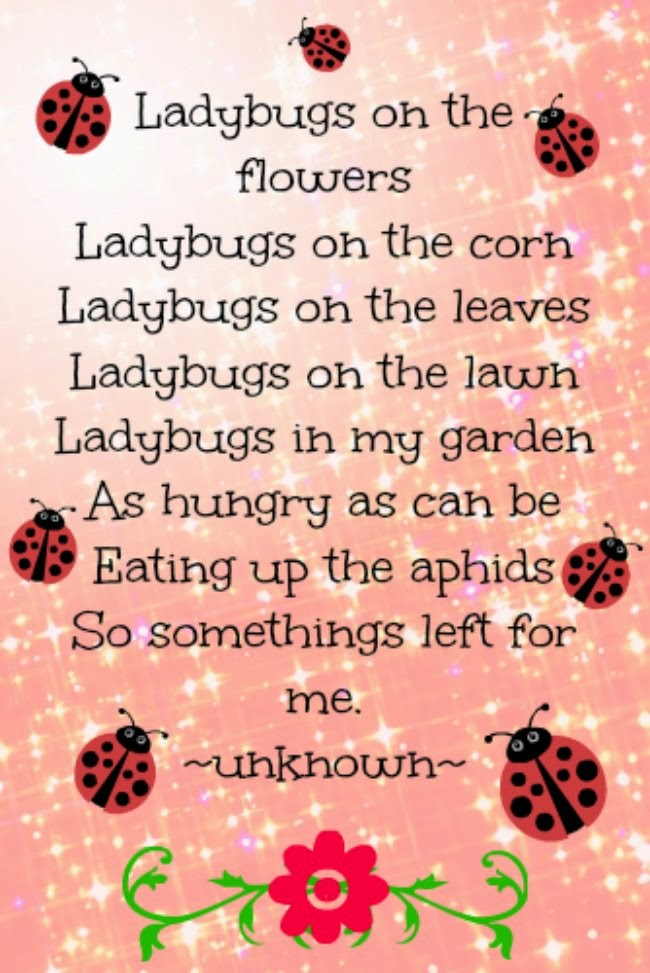 ladybug poem, how to attract ladybugs to your garden
