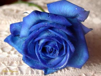 Apakah Arti Warna Biru?