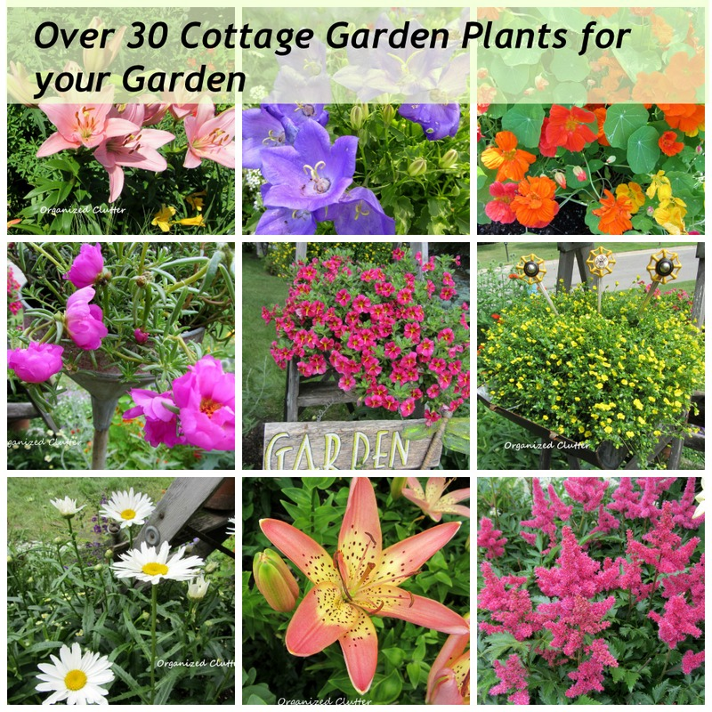 Up close personal with my cottage garden plants for Cottage garden plants