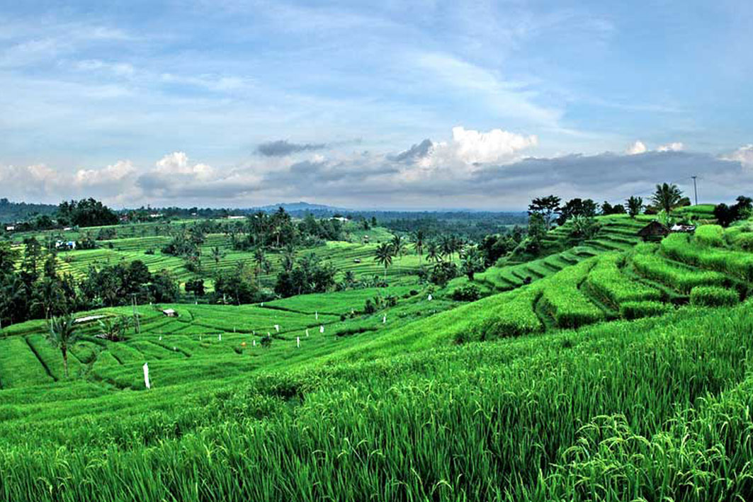 Jatiluwih rice terrace bali round trip for What does terrace farming mean