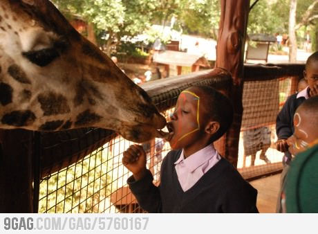 French Kiss With A Giraffe