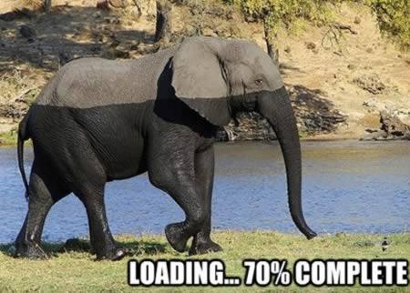 Gajah Loading...