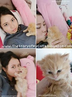 kucing cantik