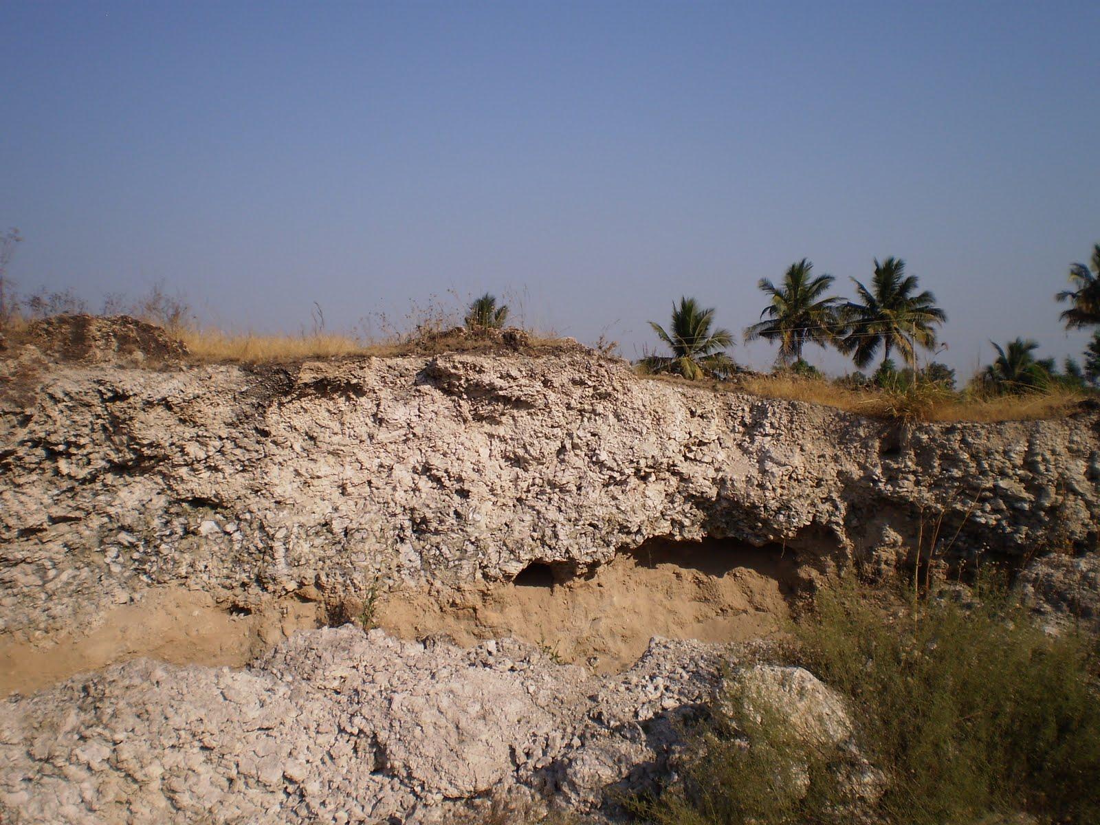 Past Forward: Cowboys of Karnataka