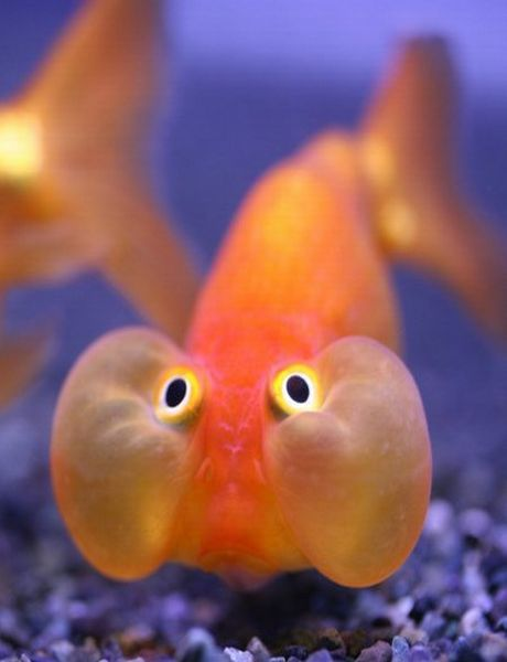 Funny Fish Pictures-Ph...