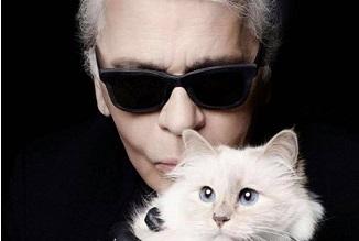 Tony Berbece 🔴 Încă o pisică milionară