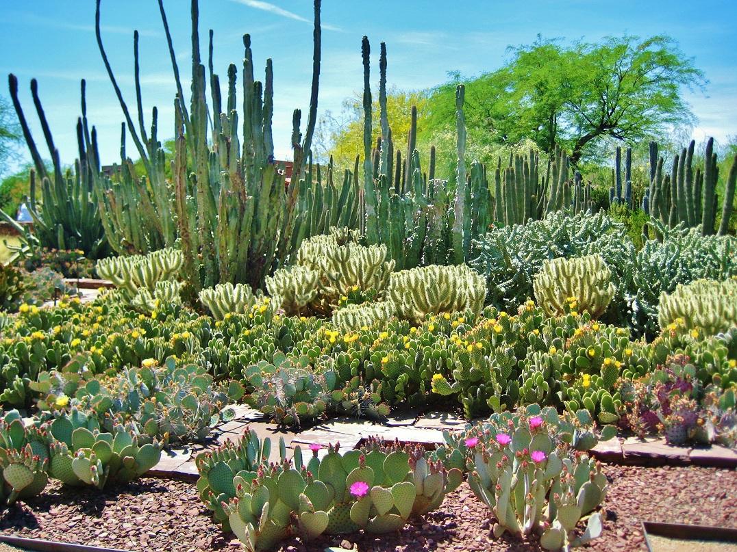 Filename: Desert Botanical Garden 14.JPG