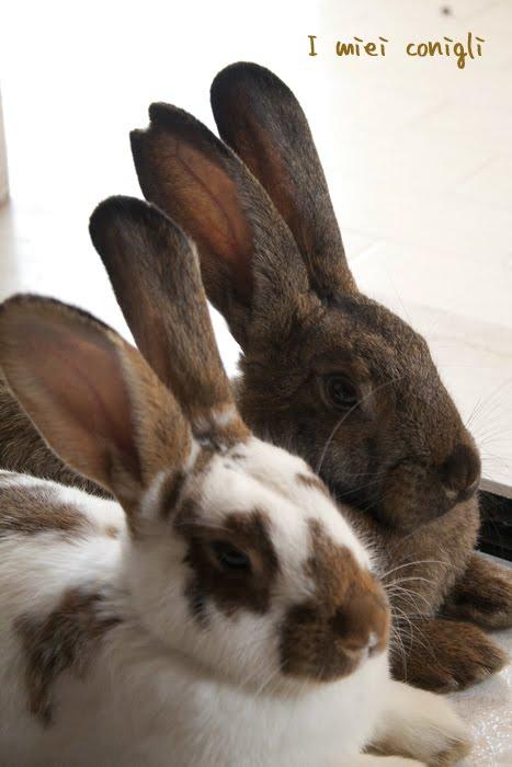 Io amo i conigli