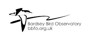 Bardsey Bird and Field Observatory