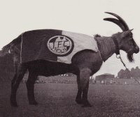 Hannes I billy goat FC Köln Mascot