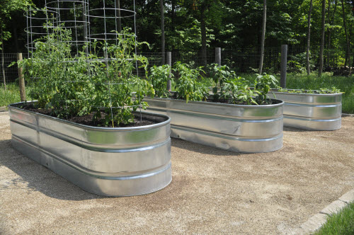 Galvanized stock tank thinking outside the boxwood - Galvanized containers for gardening ...