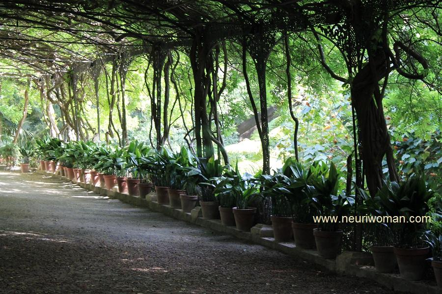 El cenador de glicinias jard n bot nico de m laga for Jardin botanico de malaga