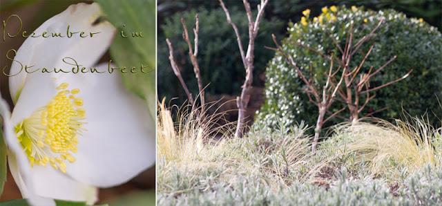 Staudenbeet im Winter - Immergrüne, Lavendel, Gräser und Gehölze als strukturbildende Pflanzen
