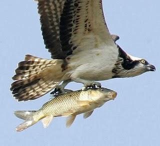 pássaro e peixe