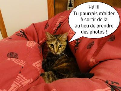 Lourdes, jolie chatte dans un pouf rouge.