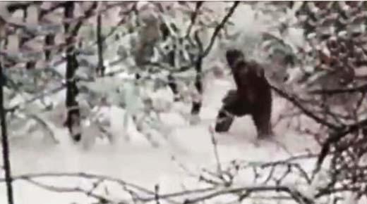 ¿Prueba de Pie Grande? Nuevo video del 'Yeti' muestra a bestia peluda gigante caminando a través del bosque de Rusia