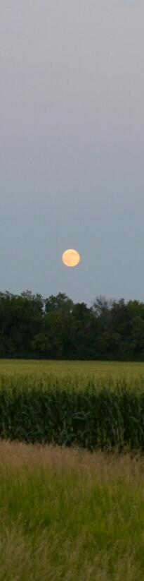 moon over cornfield