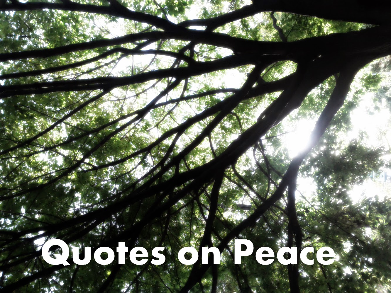Quotes on Peace