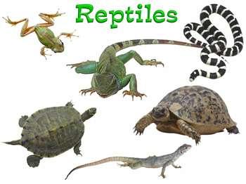 dibujo de reptile: