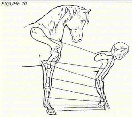 La conformación del caballo árabe: los ideales, teorías y ...