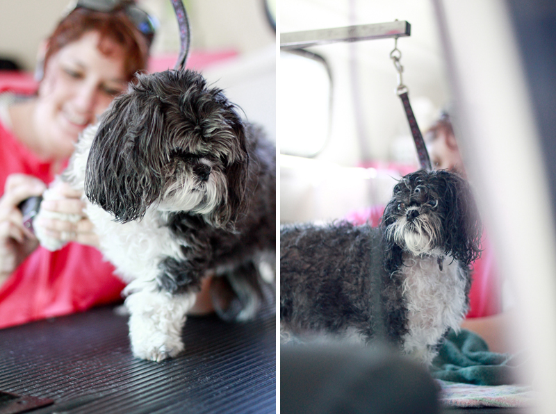 Pooch Panache Mobile Dog Grooming, Warsaw IN Pet Photography, Dog Grooming Photography, Warsaw IN Lifestyle Photography