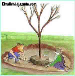 arbustos, árboles, trasplante