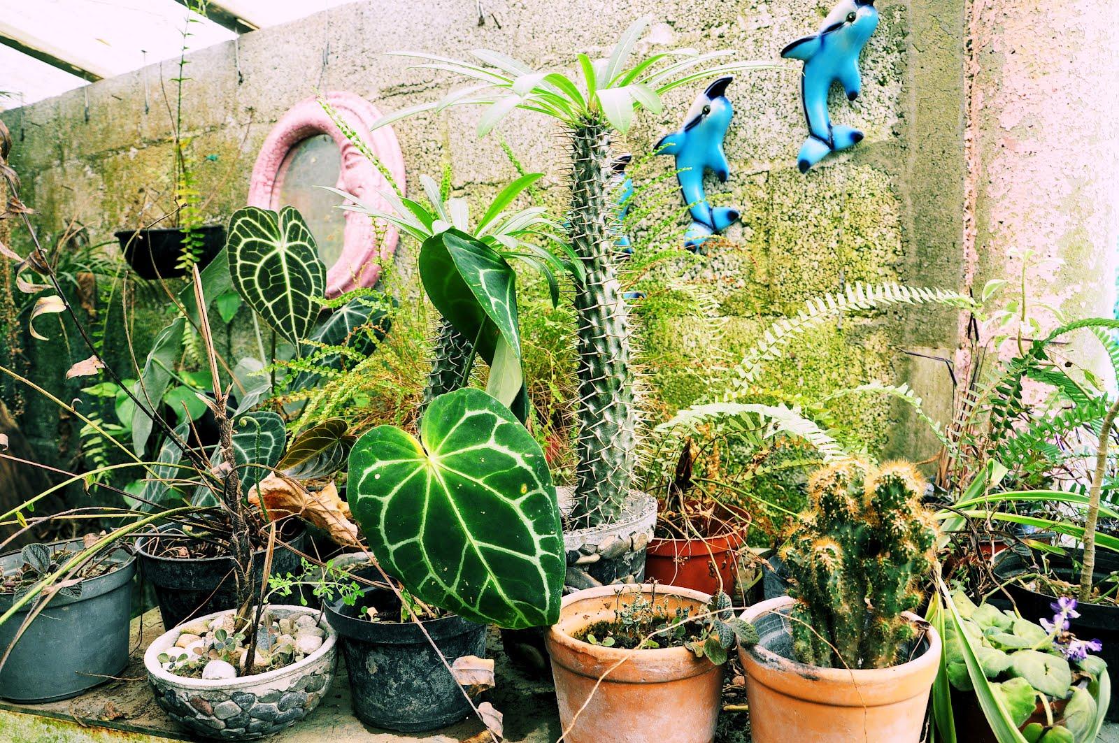 Directorio tlapacoyan vivero y venta de plantas a orillas for Viveros de plantas