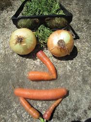 cebollas y zanahorias