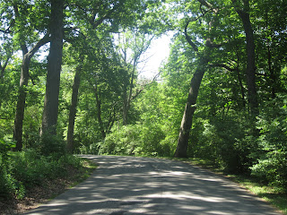 Road through the trees, The Wrong Simple Solution - How often does God save your future for you?