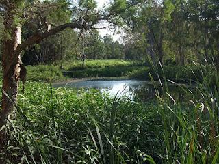 tingalpa lake green leafy