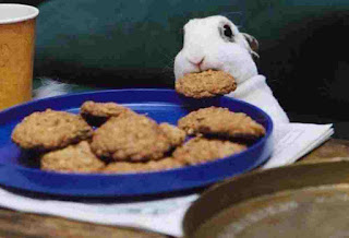 Bunny rabbit like cookies biscuits
