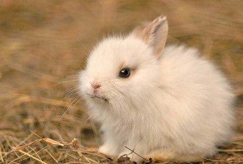 Small white bunny.